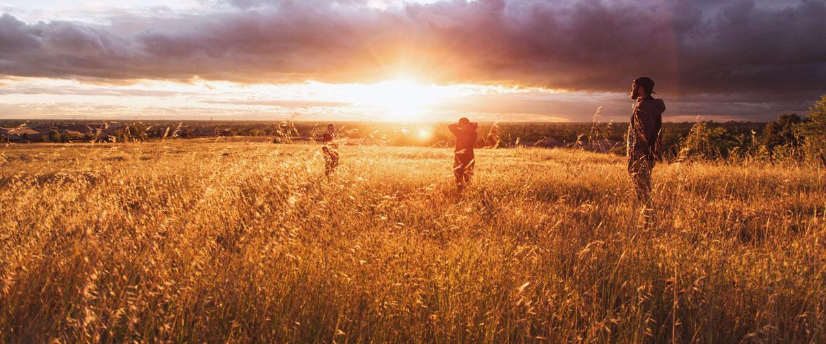 Ein Feld in der Abendsonne